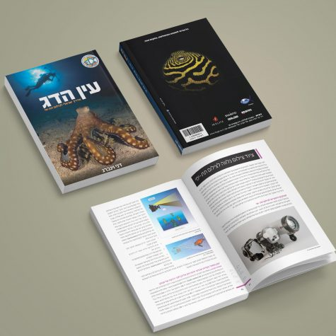 עיצוב ספר צלילה הכולל עימוד